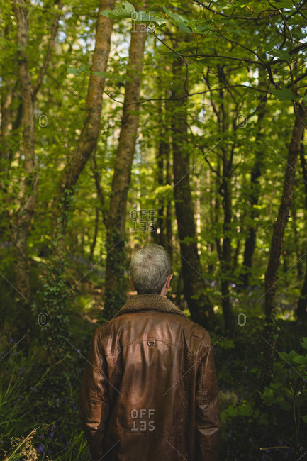 Rear view of thoughtful man standing in forest
