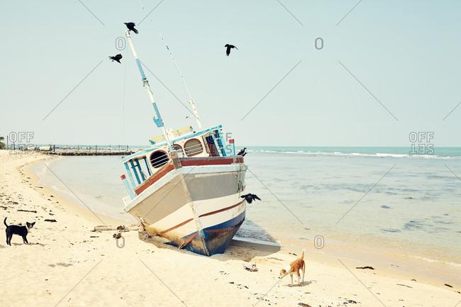 Dogs by a boat in Sri Lanka