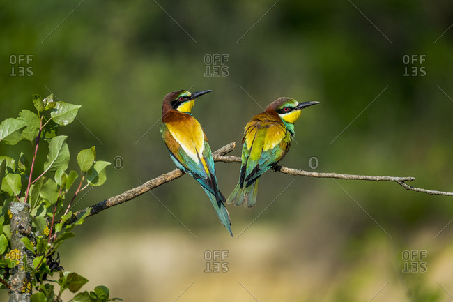 Two colorful birds perched on tree branch