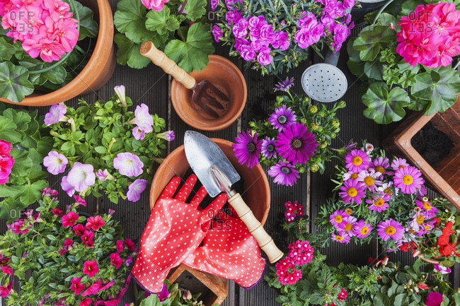 Gardening- different spring and summer flowers- gardening tools on garden table