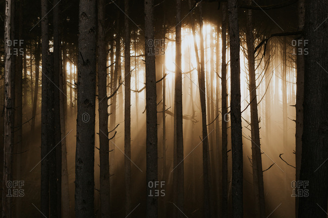 Dramatic sunlight pours through forest trees