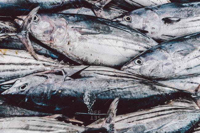 Close up of fresh caught fish in Puerto Lopez, Ecuador