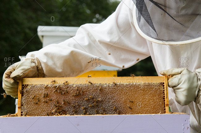 Beekeeper looking at honeycomb