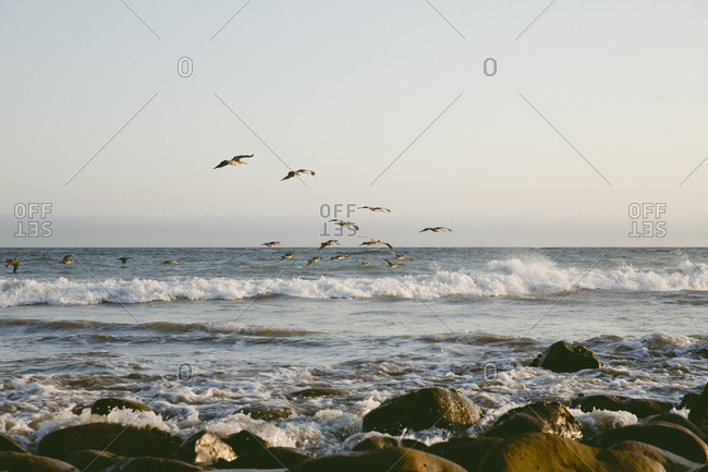 Birds fly along the waves in the ocean