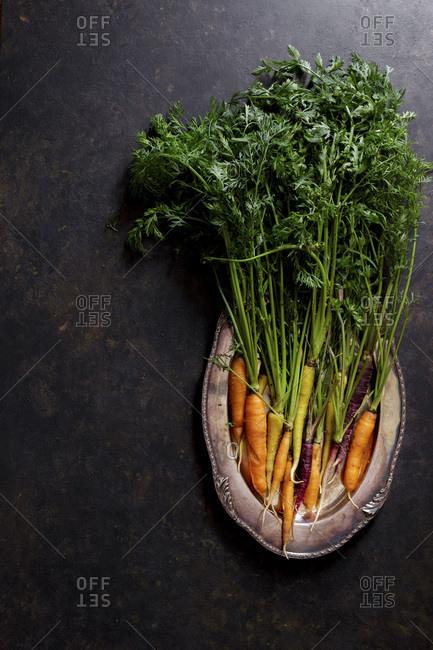 Fresh carrots on a dark background