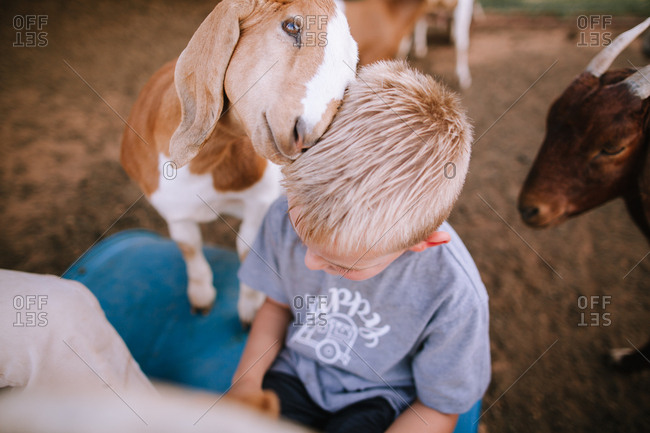 A goat loving on a boy