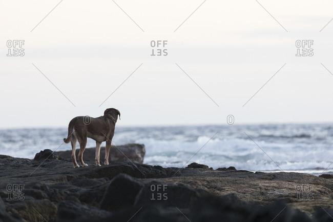 Dog standing on rocks near ocean