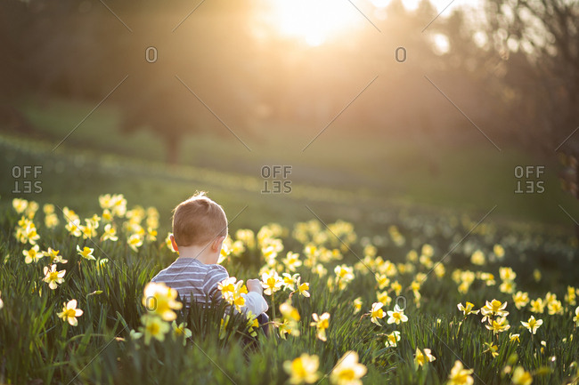 Boy in daffodil field at sunset