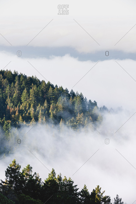 Fog surrounding Mount Tamalpais, California