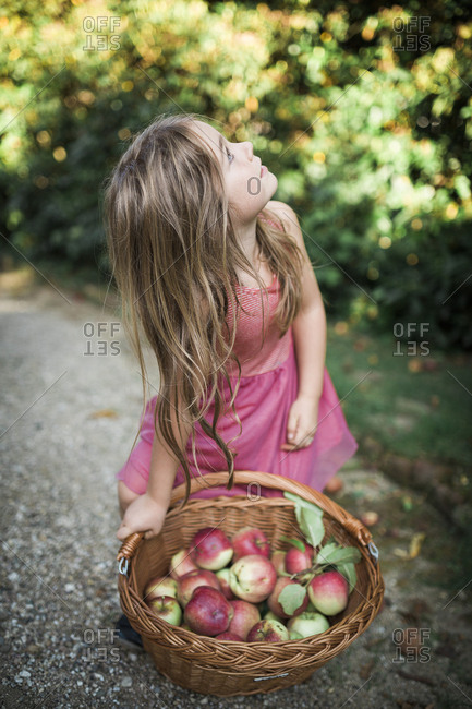 Girl with a basket full of freshly picked apples looking up at trees