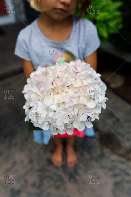 Girl holding hydrangea blossoms