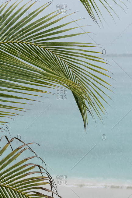 View of ocean through palm leaves and rain