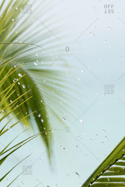 Raindrops on window glass with palm leaves in background