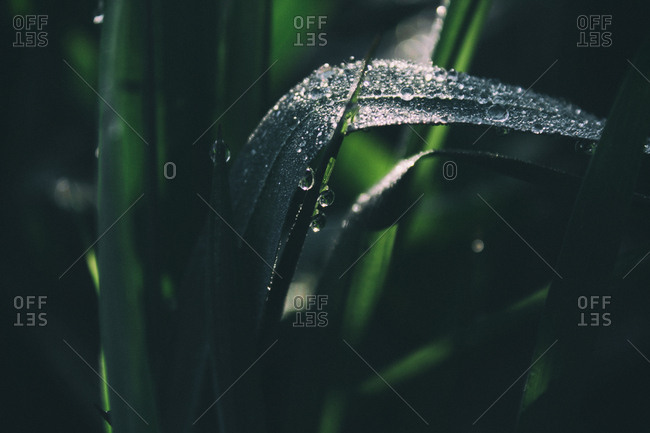 Close-up of water droplets on blades of grass