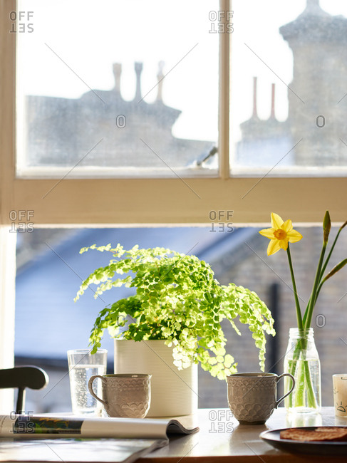 Breakfast table with coffee and plants by a sunny window