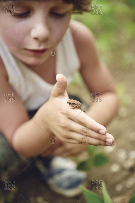 Frog crawls on a boy's hand