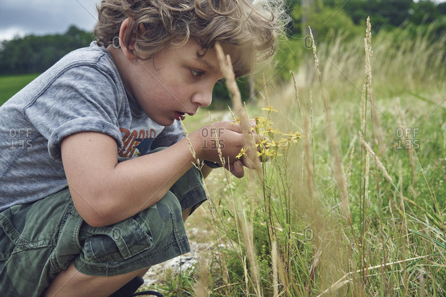 Boy explores wildflowers