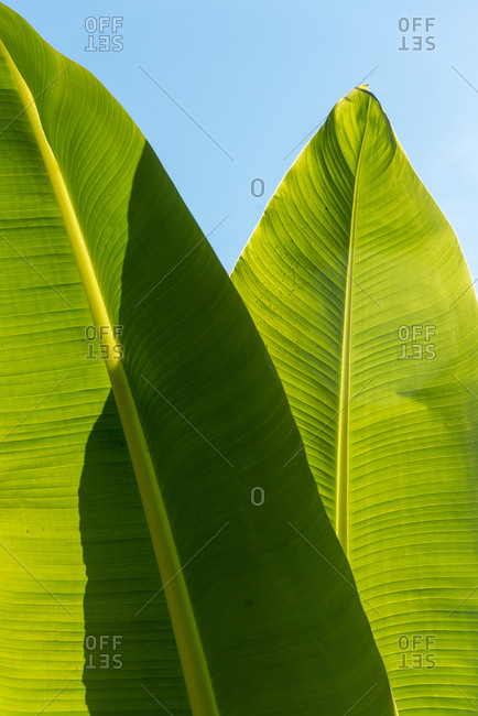 A green leaf against a blue sky