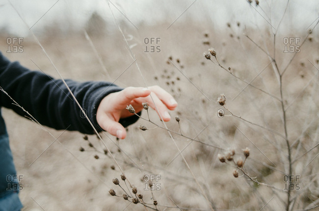Cropped hand of boy touching dead plants at field