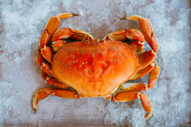 Red crab on baking tray with ice