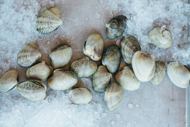 Clams on baking tray with ice