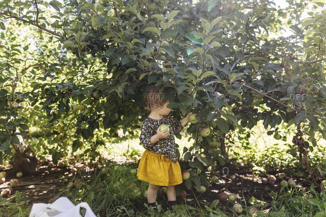 Girl under tree picking apple