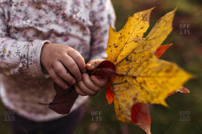 Girl with autumn leaves in hands