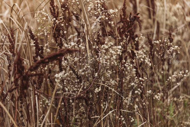 Dry grass and wildflowers