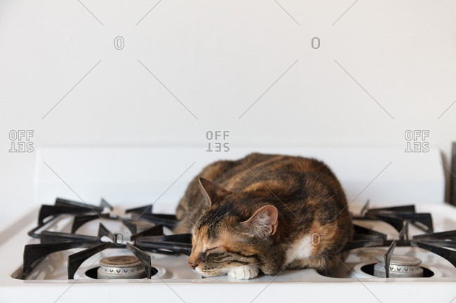 Cat asleep on a gas stovetop