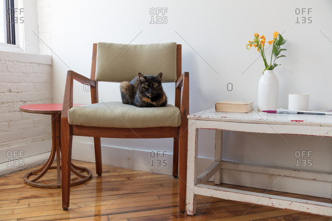 Cat sits in an armchair