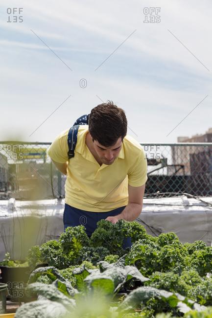 Man visits an urban garden