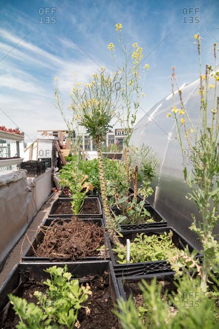 An urban rooftop garden - Offset
