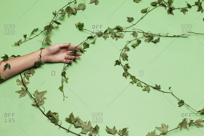 Person's arm wrapped in ivy vine