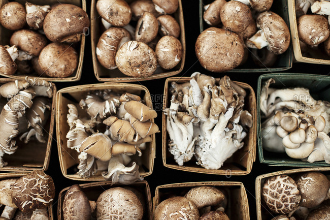 Variety of mushrooms on display at farmers' market