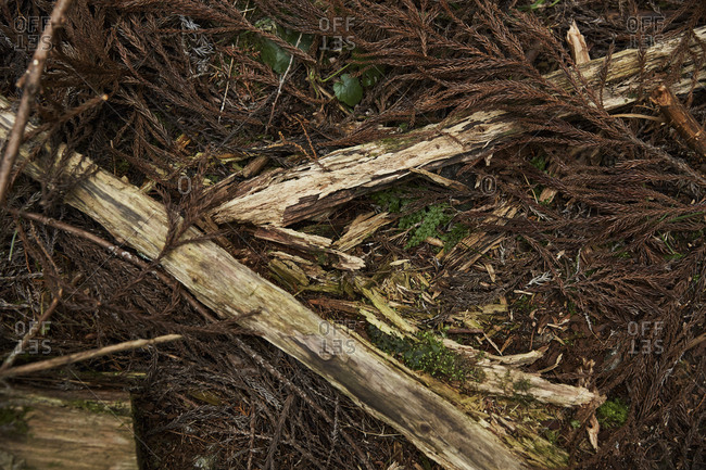 Dried pine needles and bark on forest floor