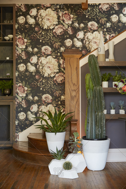 Cactus plants by a stair landing