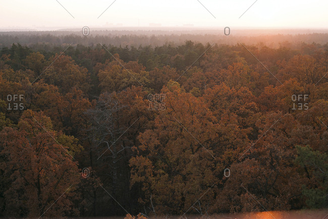 Scenic view of forest in autumn