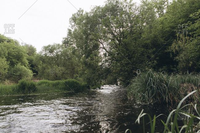 Trees near river