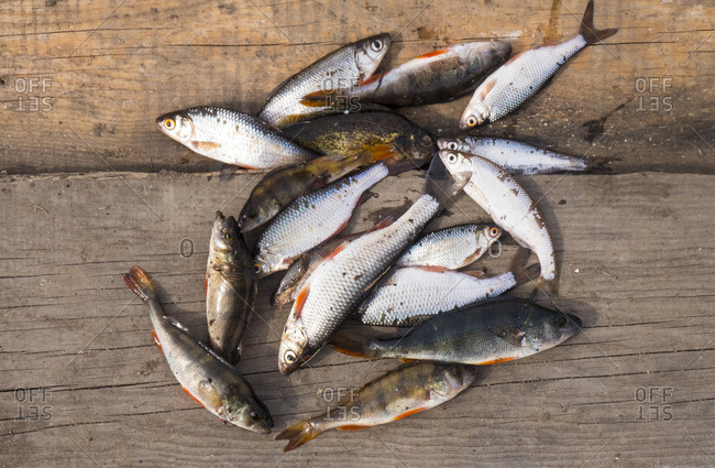 Fish on wooden boards - Offset