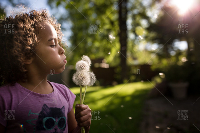 Little girl blowing seeds from dandelions