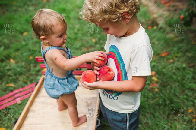 Two kids collecting peaches