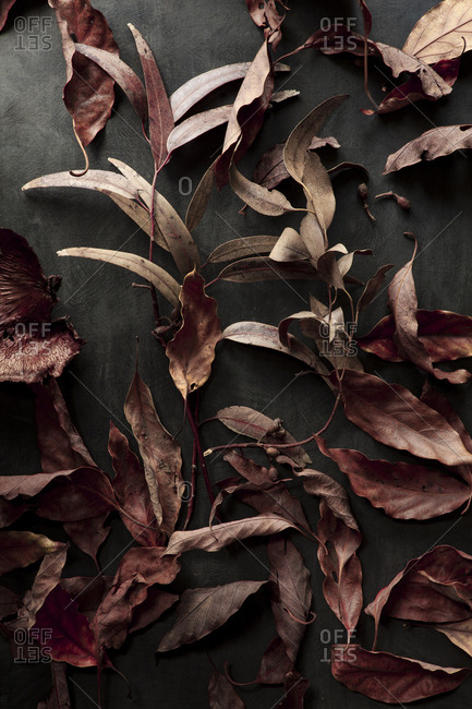 Still life of dried leaves on a dark background