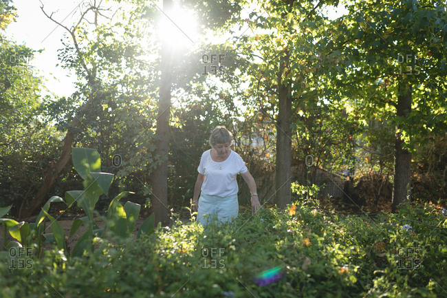 Senior woman walking in forest on a sunny day