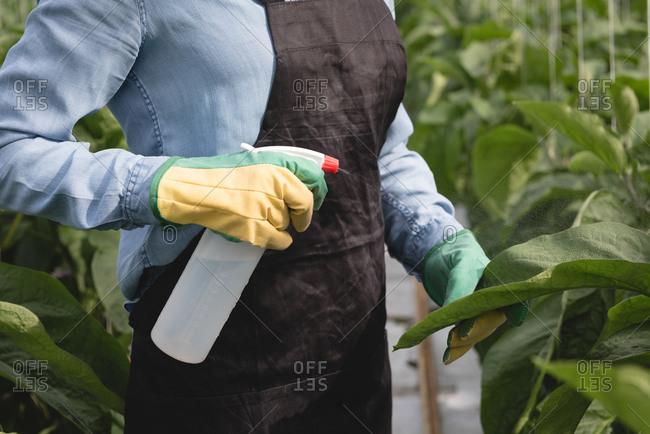 Mid-section of woman spraying water on plant in green house
