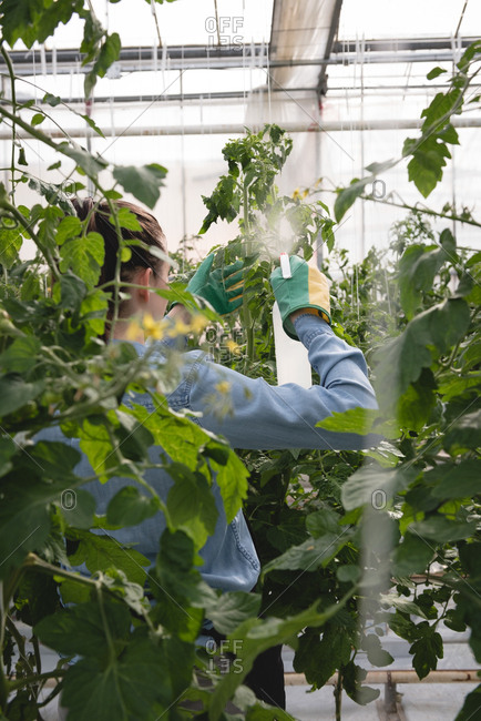 Woman spraying water on plant in green house