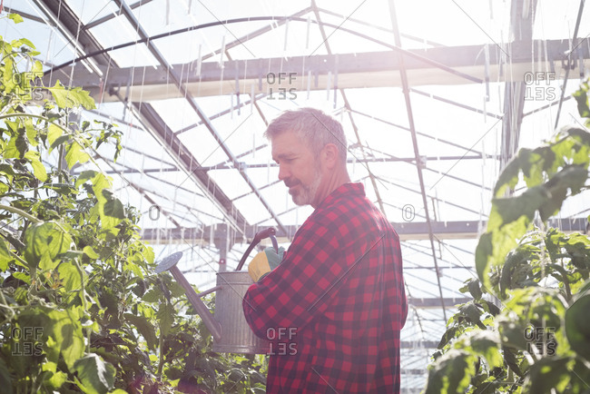 Man watering plant with watering can in greenhouse
