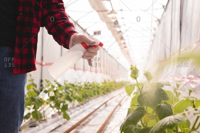 Mid-section of man spraying water on plant in greenhouse
