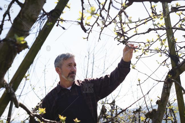 Man examining a tree on a sunny day