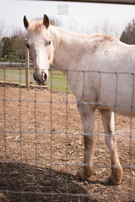 Horse in the ranch on a sunny day