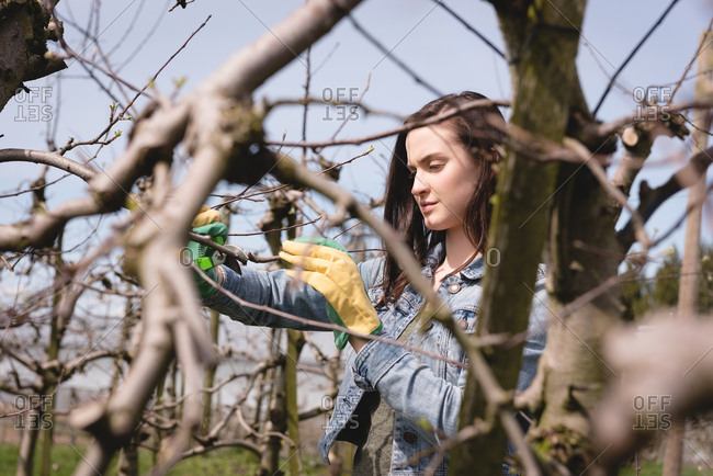 Woman examining a tree on a sunny day